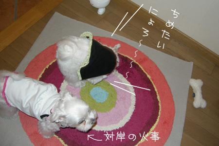8_20_5208.jpg