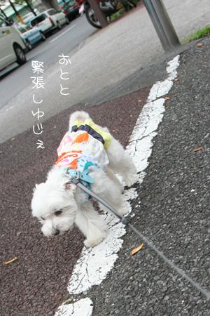8_27_6286.jpg