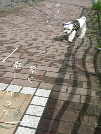 8_31_5473.jpg