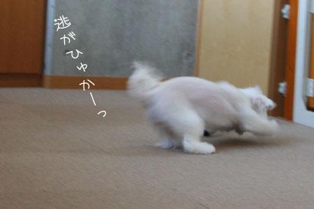 8_31_6608.jpg
