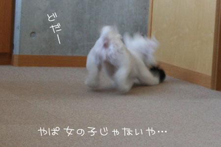 8_31_6611.jpg