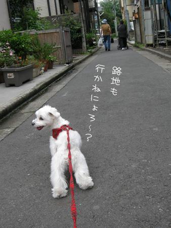 9_19_5696.jpg