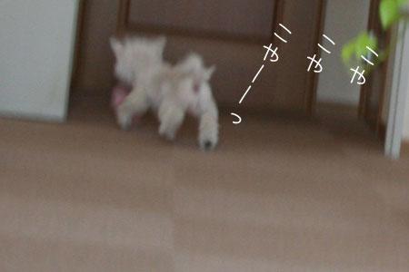 9_1_6709.jpg