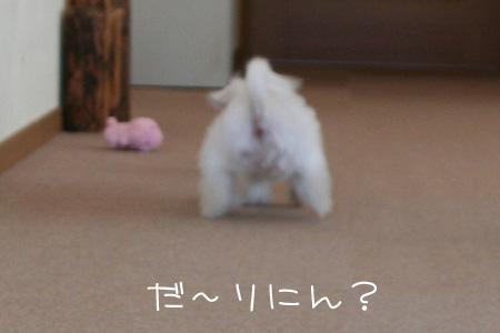 9_3_7194.jpg