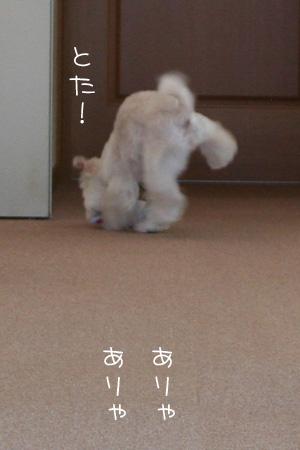 9_3_7243.jpg