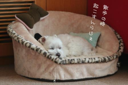 9_3_7246.jpg