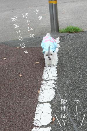 9_5_7343.jpg