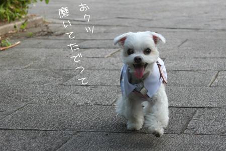 9_7_7809.jpg
