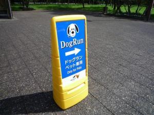 dog_run.jpg
