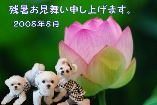 2008.残暑お見舞い3