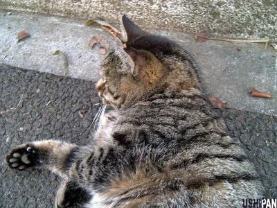 野良猫写真1