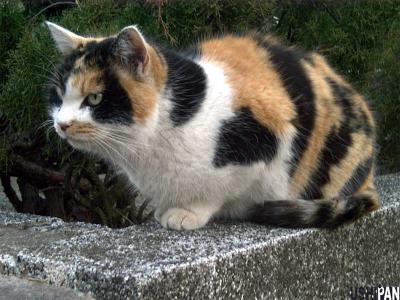 野良猫写真2