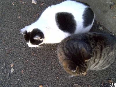 仲良し野良猫
