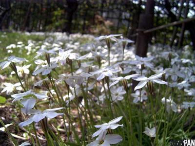 白い花と緑の虫1