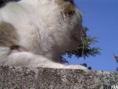 猫の訴え1