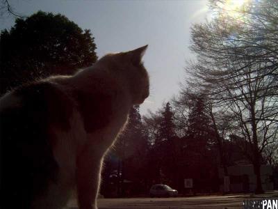 黄昏野良猫