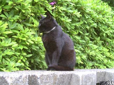 代々木公園猫2