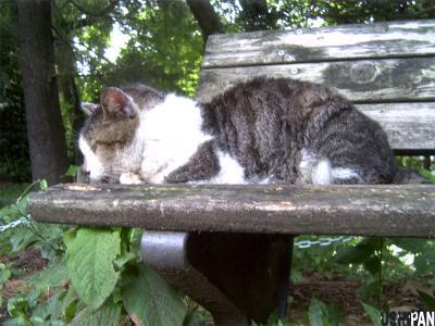 善福寺猫1