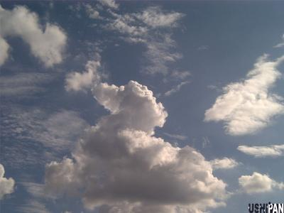 カルガモ雲