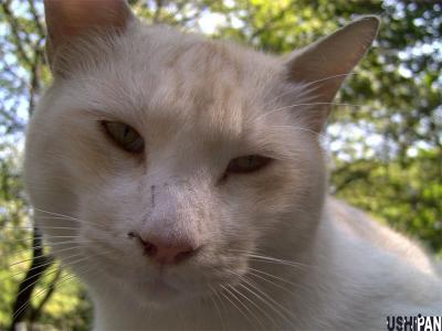 善福寺猫2
