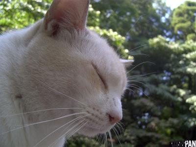 善福寺猫3