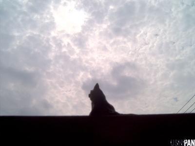 窓辺の猫1
