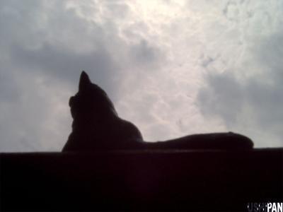 窓辺の猫2