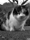 cat002.jpg