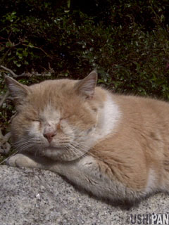 cat003.jpg