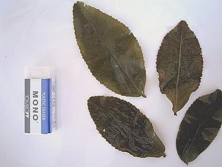 烏龍茶の葉