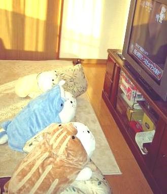 テレビに夢中のしろたん