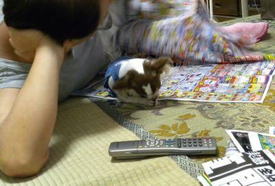 うずら・2009.8-no.2 420