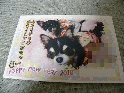 うずら・2010.1-no2 980
