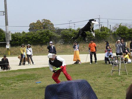 うずら・2010.4-no2 067