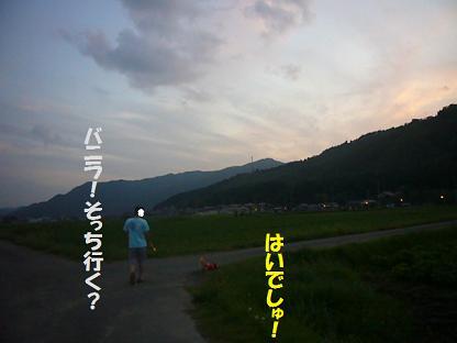 夕方散歩②