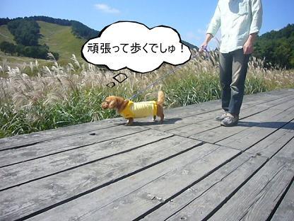 歩くでしゅ!