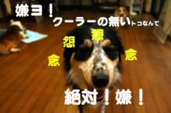 07.08.06blog1.jpg