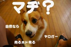 07.08.06blog2.jpg