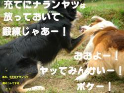 07.10.11blog.jpg