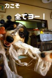 07.3.29blog2.jpg
