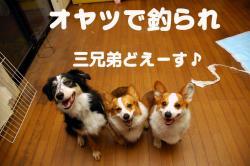 07.6.1blog1.jpg