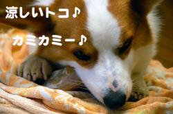 07.6.21blog3.jpg