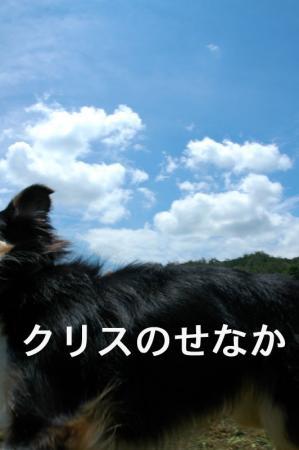 080713blog2.jpg
