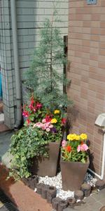 入り口の植木0527