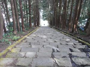 長興山紹太寺のしだれ桜階段