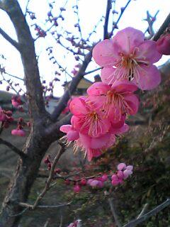04-03-14_17-49.jpg