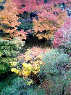 東福寺のグラデーション