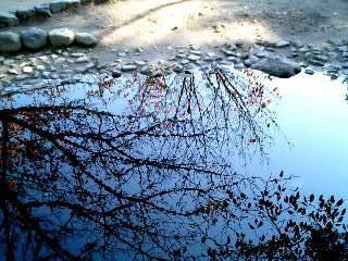 出水の小川