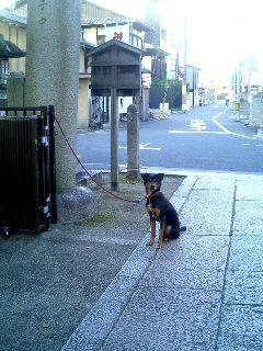 上御霊神社の門前で待つポチ
