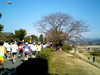京都ハーフマラソン②